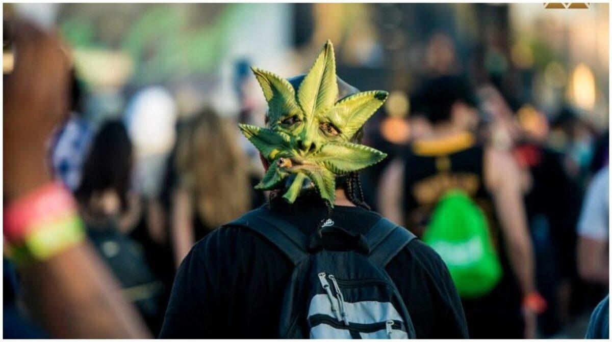 Festival Cannabis
